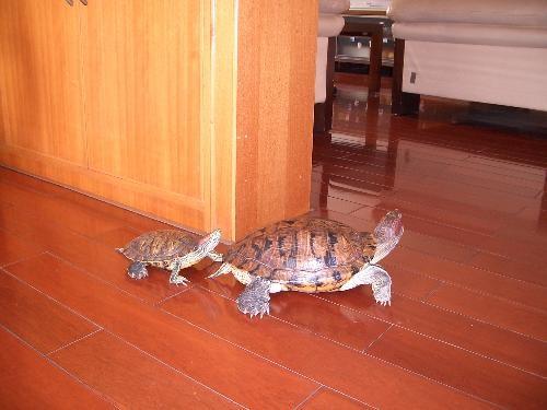 装修新闻 纸菠萝的折法图解 很实用的方法  不少人喜欢饲养乌龟,尤其